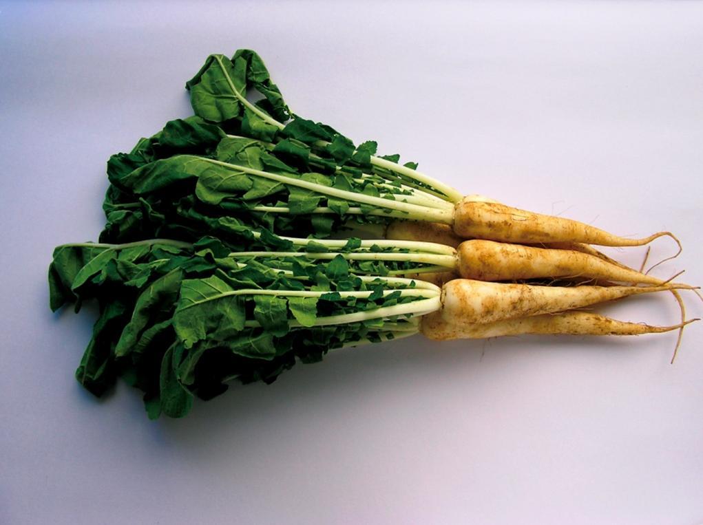 江戸の伝統野菜・亀戸大根提供  大地を守る会