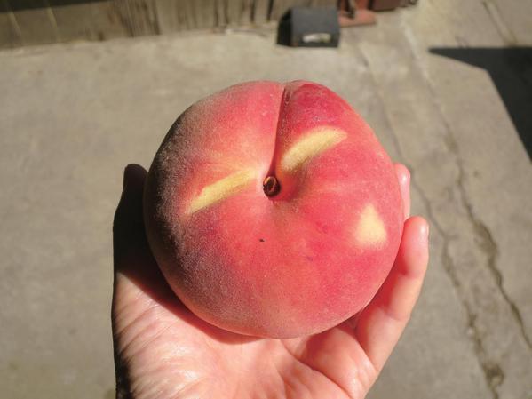 樹上で熟した桃