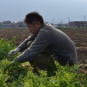 """""""感動の有機野菜""""は「森のような畑」で育つ?"""