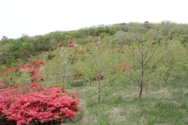 4年前に植えた広葉樹も大人の身長程の高さに成長しました。