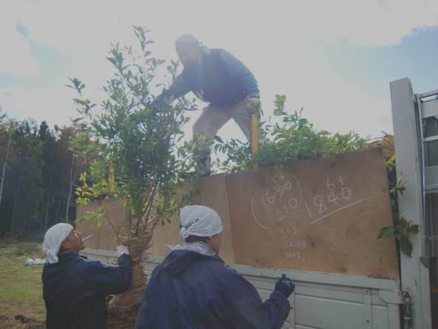秦野森林組合のトラックに大切な苗木を積み込みました。