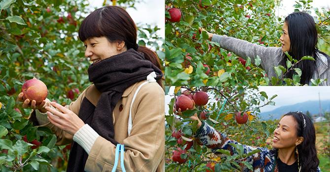 左:「りんごの収穫は初めて! ふだんりんごは、そのまま食べるほか子どものお弁当に入れたり、アップルパイを作ったりします」とモデルでイラストレーターの香菜子さん 右:ファッションデザイナーの可児ひろ海さん(上)は、「りんごを食べるといつも口の周りがかゆくなるのですが、原さんのりんごはならなかった! 農薬の違いかしら?」。「日本と海外では好まれるりんごが違うんですって。聞いて驚きです!」とヨガ講師の渋木さやかさん(下)