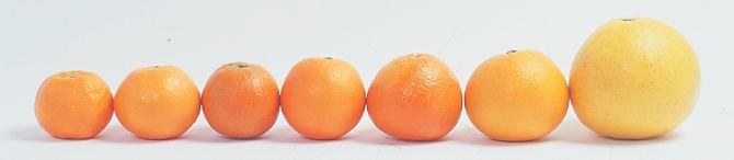いろいろな柑橘