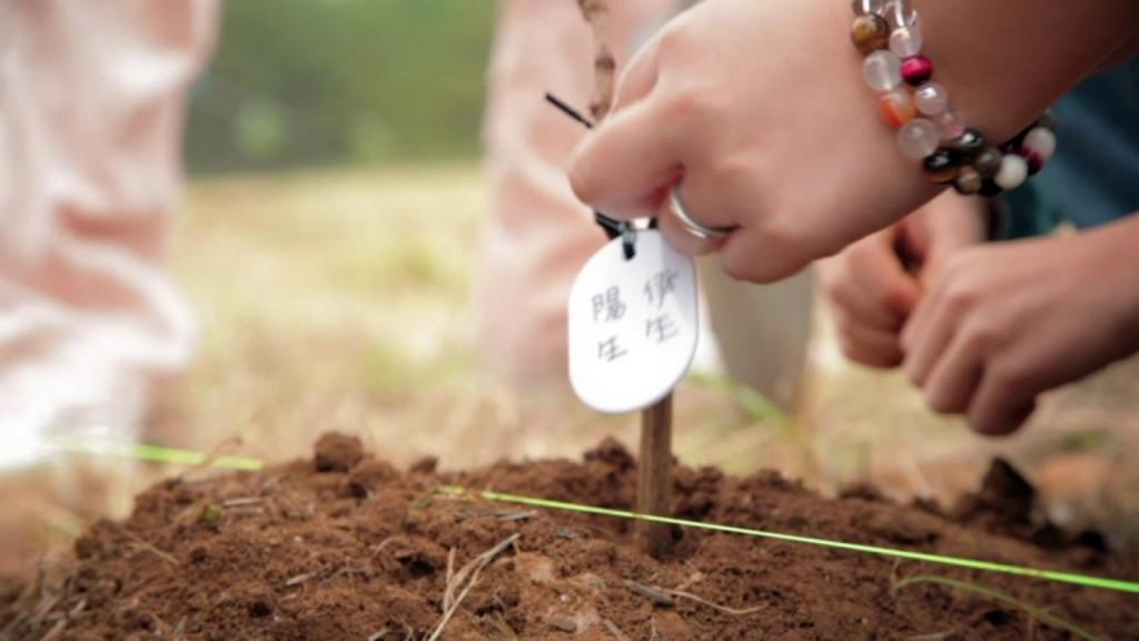 苗木のオーナー制度など支援者参加の仕組みを準備中とのことです