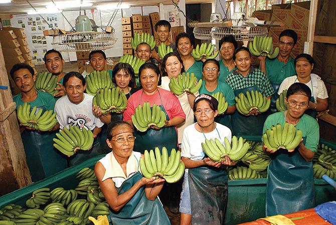 フィリピンのバナナ生産者