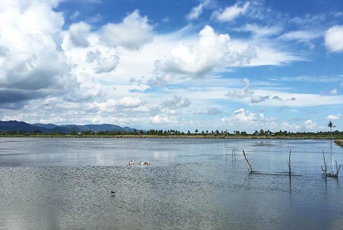 森の栄養が注ぎ込む河口域にある粗放養殖池の風景。エコシュリンプの養殖が続くことで、太古からある、この大自然が守られているのかもしれません