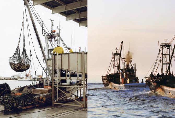 (左)港近くの漁場で漁獲したホタテは、昼には水揚げ。水揚げ後は鮮度を保ち加工場へ (右)稚貝を海に播いて育ったところを漁獲する「地播きホタテ」。出漁は朝日とともに