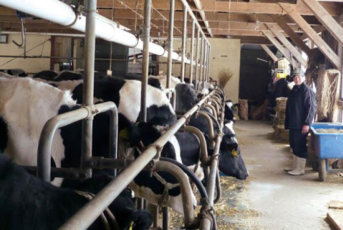 健やかに育った乳牛だから、おいしい牛乳が搾れます