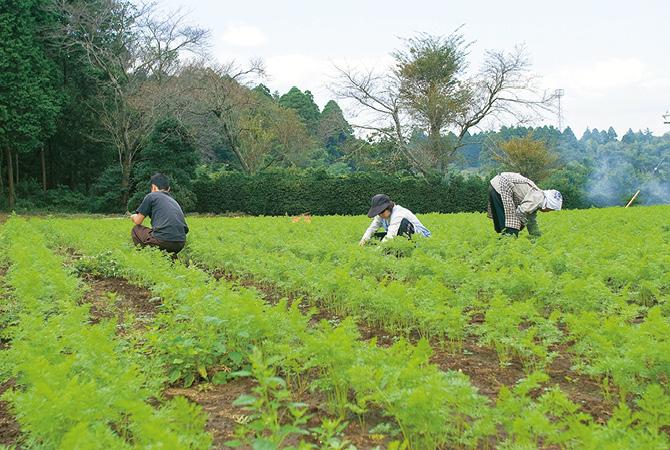 農薬や化学肥料に頼らない農業では草とりも大変。そんな畑からとれる野菜は、生産者たちの努力のたまものです。