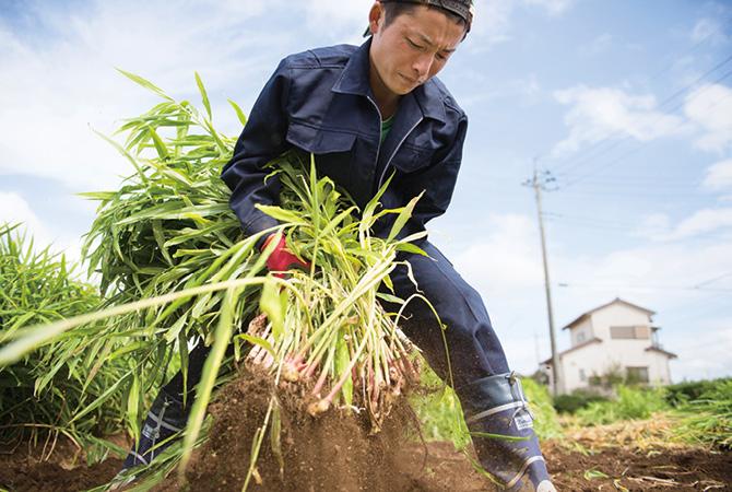 「オーガニック」を畑で支えるのが生産者。
