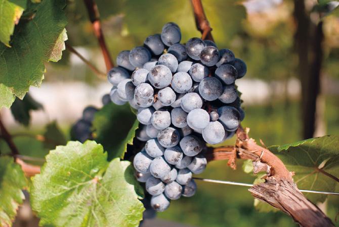 161111_wine_0012