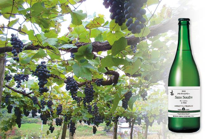 161111_wine_0015