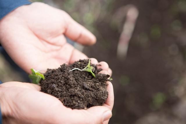 地元の川で採った葦などを発酵させて作る「野草堆肥」。
