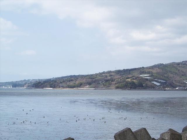 畑の目の前に広がる八代海の干潟。