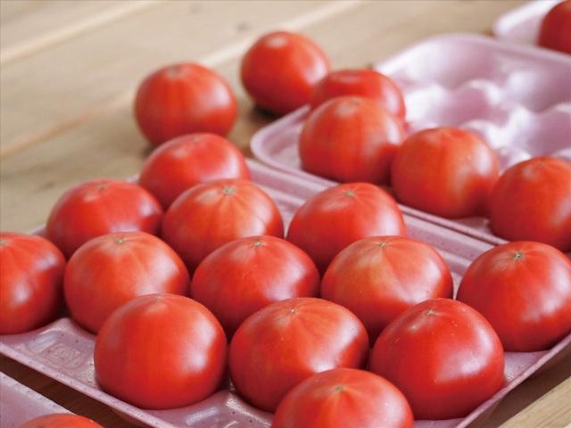 出荷前の「塩トマト」。小さくても糖度8度以上と抜群の甘み。
