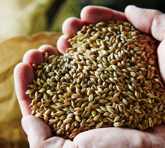 大地宅配では米やもちでおなじみの「庄内協同ファーム」が育てた六条大麦を使用