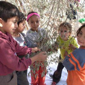 スマイルオリーブ基金~パレスチナに平和の苗木を送ろう~