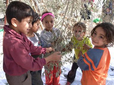 スマイルオリーブ基金,オリーブオイル,パレスチナ
