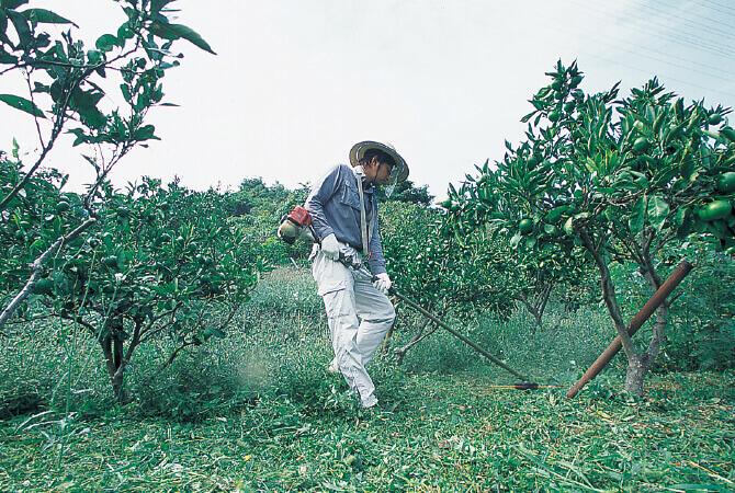 今年も同じ畑を3回以上草刈りしたという川端宏幸さん