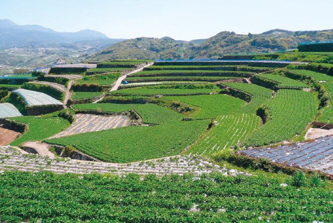 段々畑が広がる島原半島の代表的風景。長崎有機農業研究会では、直営農場も開設し、新規就農者の研修農場および食育交流活動の場として活用しています。