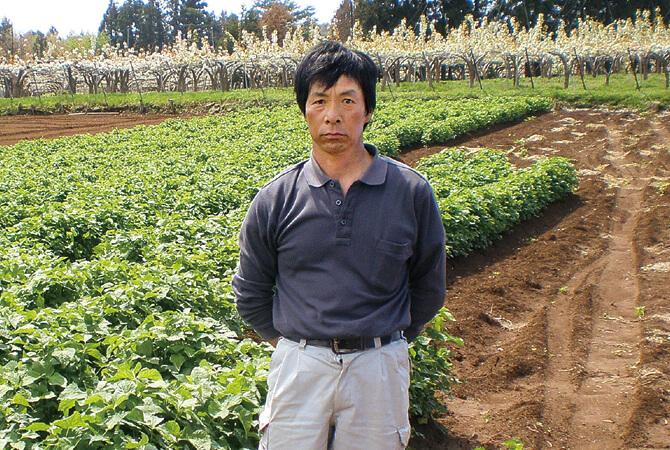 福島わかば会の根みつば生産者の一人である斎藤昭栄さん。おいしくて安全な作物を消費者に届けたいという思いに賛同した生産者が集まって1977年にできたグループです。