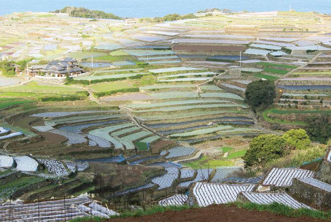 火山性の赤土が甘みの強いじゃがいもを育む長崎有機農業研究会の段々畑。「ぎっどろ」と呼ばれる粘土質の地域もあり、雨の後はがっちり固まって、鍬が入らず収穫ができないことも。