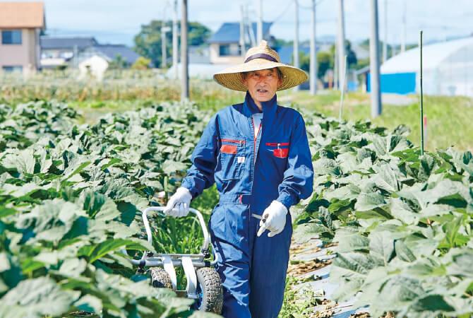 旬を迎えたオクラの畑で籾殻を敷き詰める小林勝弥さん