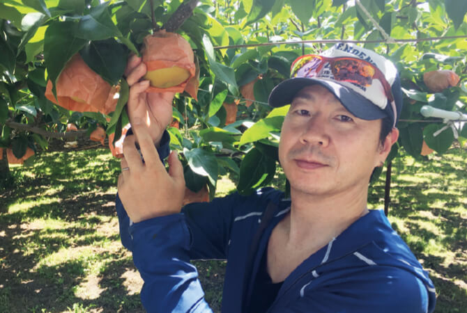 甘さしたたる南水(梨)を収穫する桜井智史さん