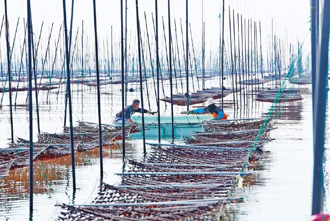 潮の干満に合わせて海に出る皿垣開漁業協同組合(福岡県柳川市)の皆さん