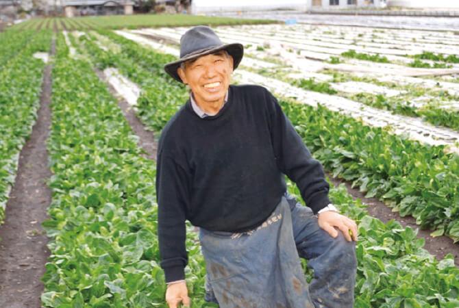 自家製堆肥をたっぷり使用した吉沢重造さんのほうれんそう畑