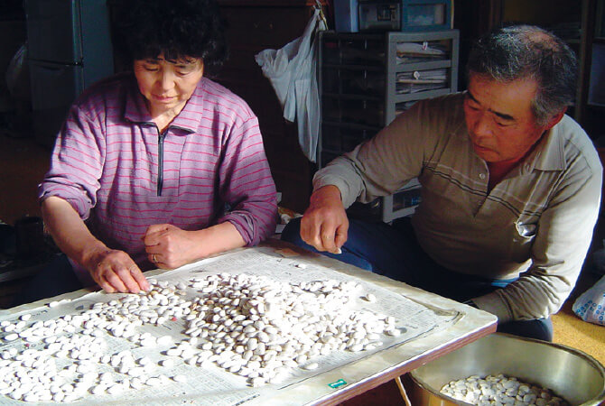 豆を一粒ずつ選り分ける「手選り(てより)」。農閑期に行う根気のいる作業。