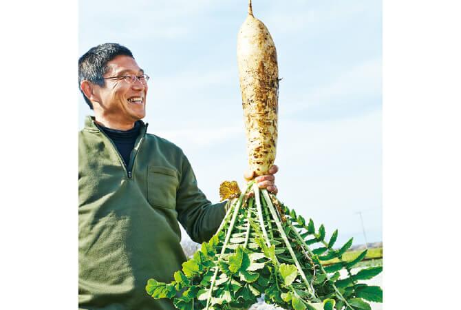 三浦大根、春の収穫体験