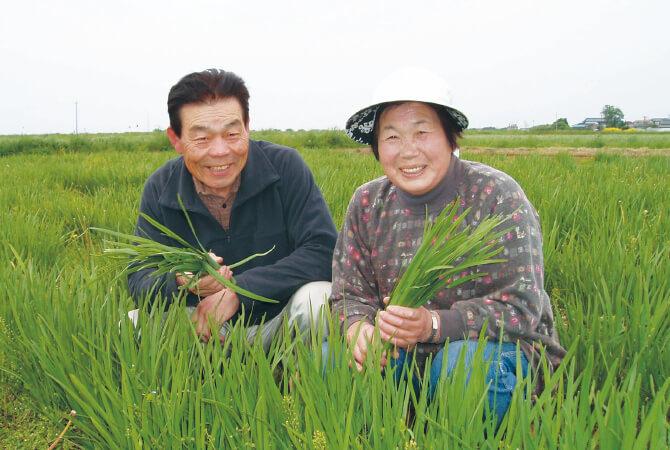 『有機・シャキシャキ香りにら』の生産者、宮城県登米市 無農薬生産組合 石井稔さんと洋子さん(右)