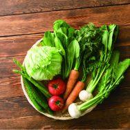【野菜宅配サービスの選び方】価格だけじゃない、失敗しない選び方とは