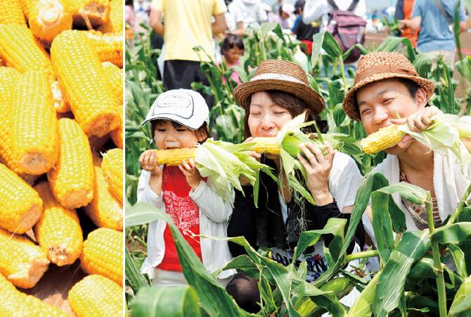 夏の三浦 とうもろこし収穫祭