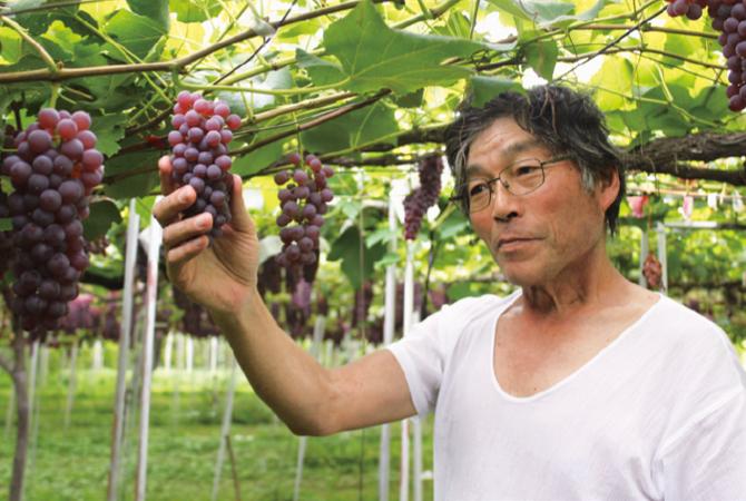 コク甘デラウェア(種なしぶどう)の生産者、山形県上山市 佐藤勘四郎さん