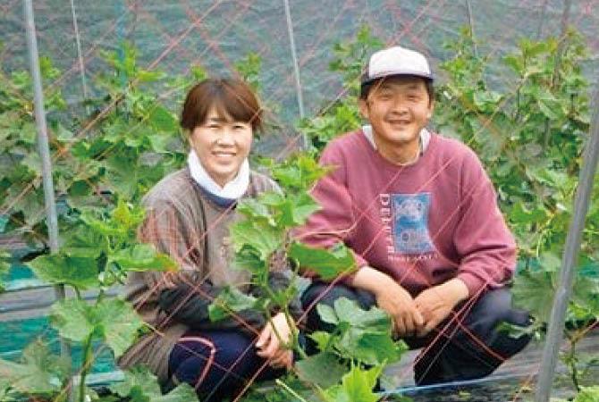 ズッキーニの生産者、群馬県高崎市くらぶち草の会 佐藤朝昭さん(右)とおつれあいの和子さん