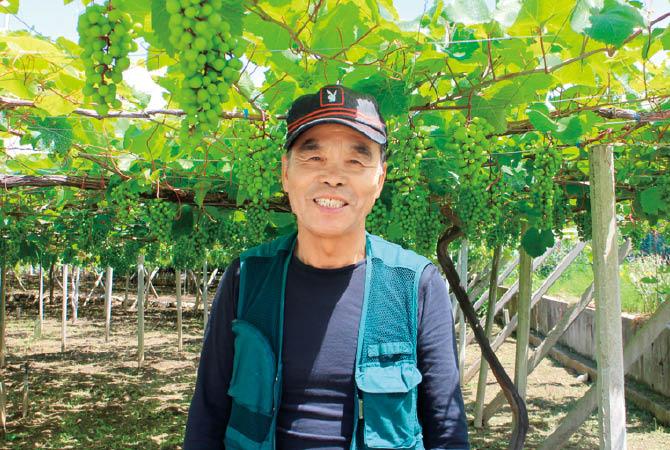 アジロンダック(ぶどう)の生産者、山梨県甲州市 勝沼平有機果実組合  渡辺孟さん
