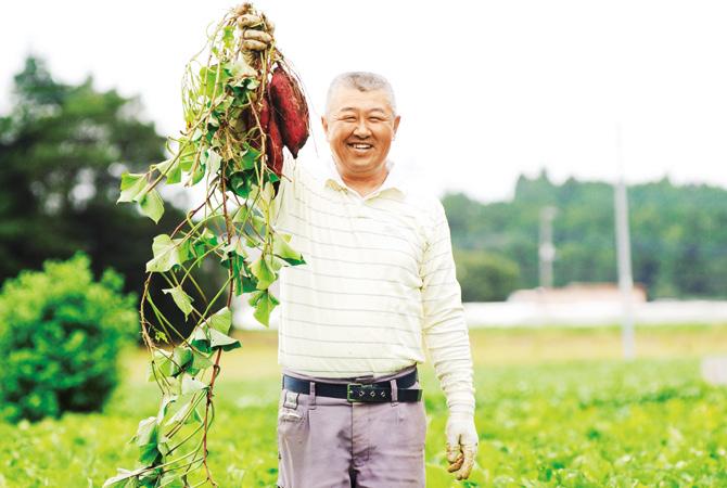 ほくほくさつまいも・紅あずまの生産者、茨城県行方市 堀田信宏さん