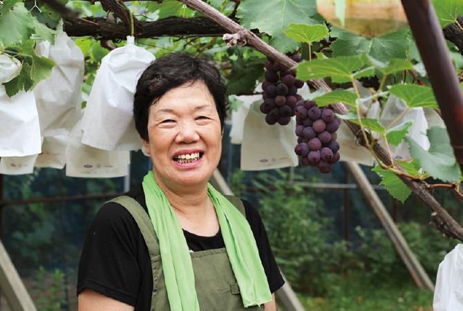 荒木さんのブラックオリンピア(種ありぶどう)の生産者、長石川県加賀市 荒木美喜子さん