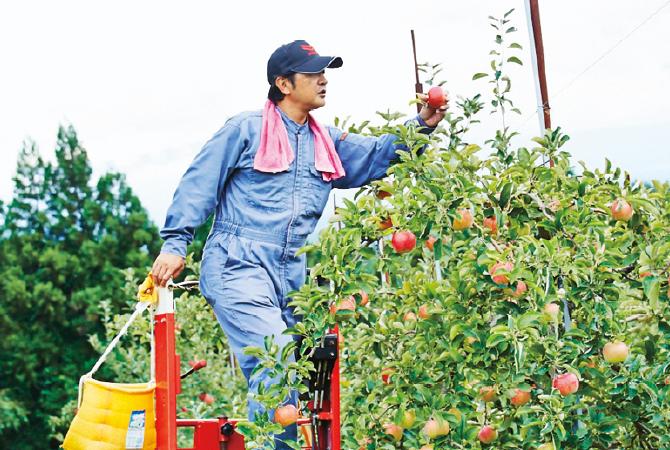 終戦を迎えた土地にりんごを植えて以来、家族みんなで愛情込めて、がんばっています!
