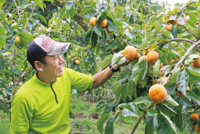 日当たり良好な高度100~500mの傾斜地で栽培。収穫も手作業で行います。