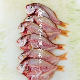 【NEWS大地を守る10月号】食べるべき魚がある