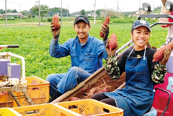 濃厚あま蜜さつまいも・紅はるか 生産者、茨城県行方市 堀田信宏さん息子夫婦