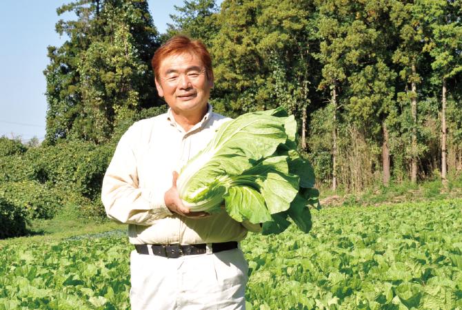 ぎゅっと凝縮甘み白菜生産者、茨城県八千代町 小野寺孝一さん