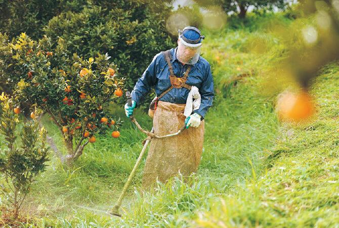 草刈りの様子。樹の根元には雑草を適度に生やし、微生物を生かすことで土をやわらかく。