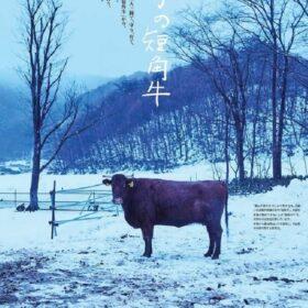 【NEWS大地を守る3月号】雪どけの短角牛