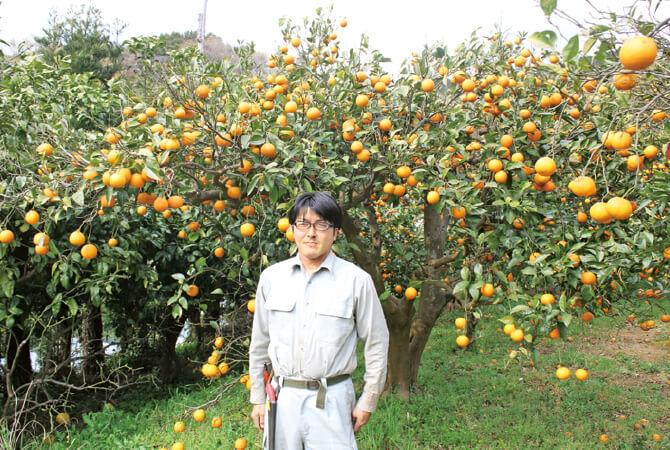 福原オレンジ生産者、静岡県南伊豆町 南伊豆太陽苑生産者グループ 島崎孝行さん