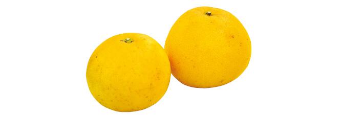 熊本のグレープフルーツ