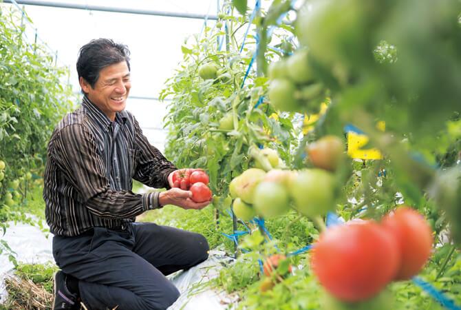 トマト生産者、熊本県宇城市 肥後あゆみの会 澤村輝彦さん